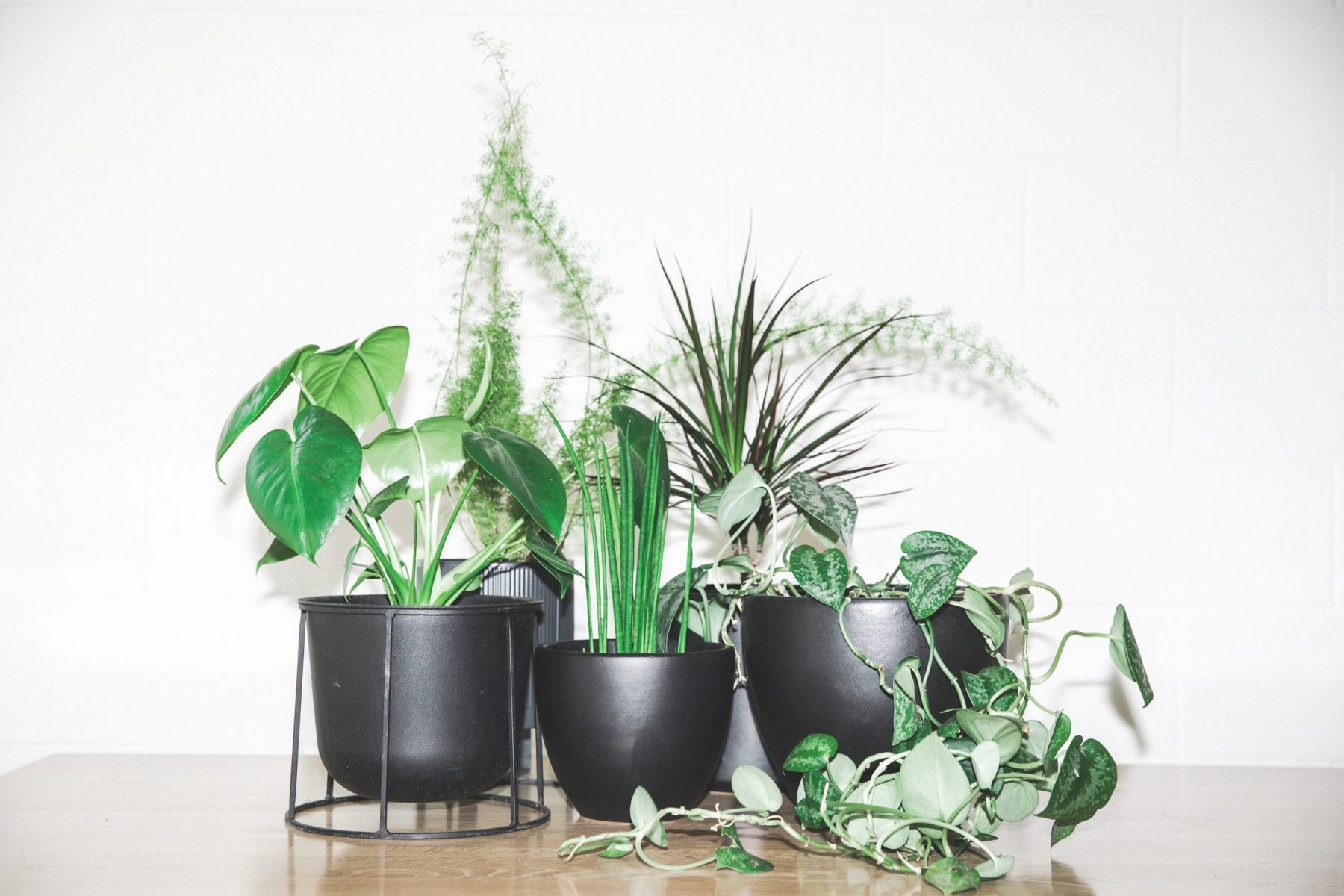 33 Recommends: Top 5 House Plants
